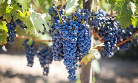Българското вино – традиция с отличен вкус