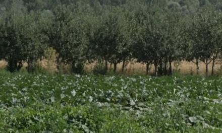Спад на  брутната продукция в зърнопроизводството, но рекордни изкупни цени. Доматите най-засегнати в зеленчукопроизводството. CAPA обобщава.