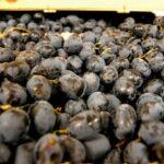 Младите фермери и ПРСР/2014-2020/. И нова мярка за съхранение на виното при криза.